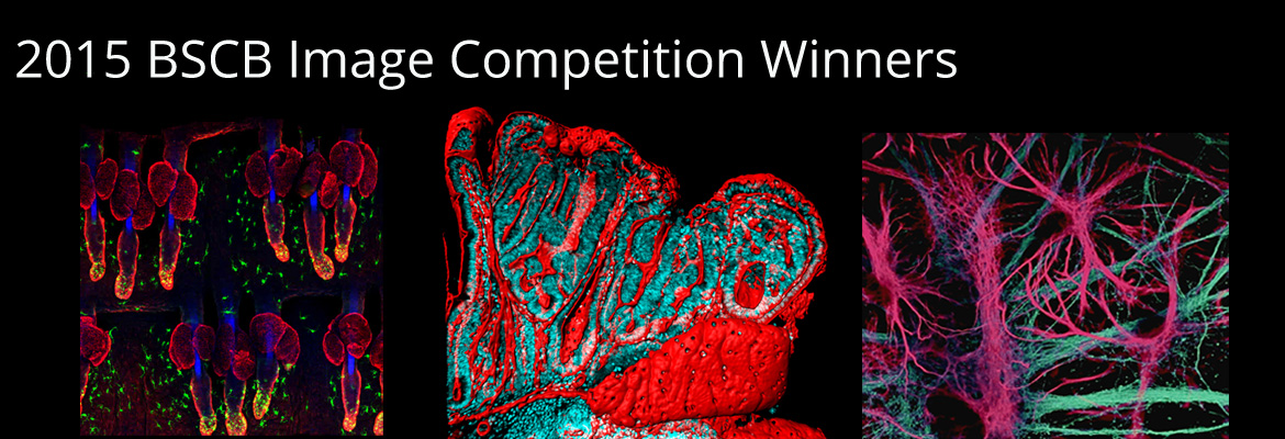 image competition 2015